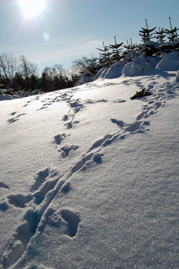 Fodspor i sneen