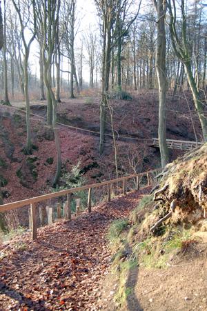 Kollund skov