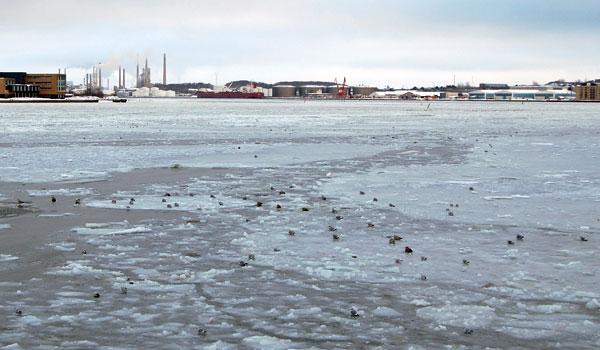 Vinter ved havnen i Aalborg